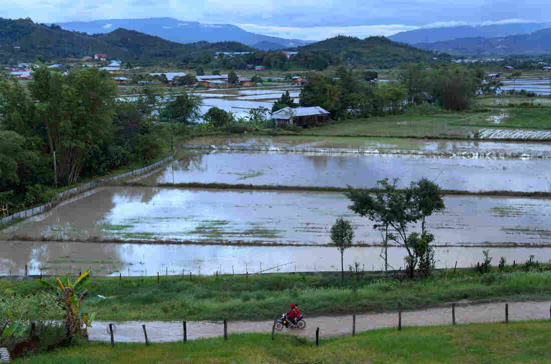 Bario and its rice paddies in the Kelabit Highlands of Malaysia.
