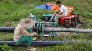 Mechanization Brings Quick Change To Borneo Region Known For 'Slow Rice'