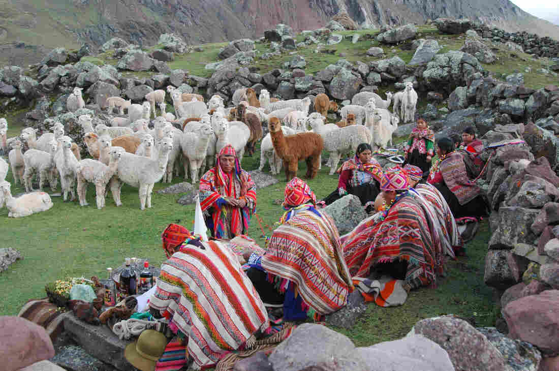 "Peru's alpacas are blessed once a year, during rainy season. The blessing declares: ""Let there be a great abundance of alpacas, so that the alpacas should be like the condor and appear to fly from one mountain to another."""