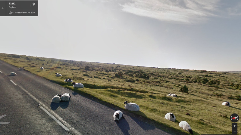 These sheep in England chose an ill-advised napping spot as the Google Street View van drove through town.