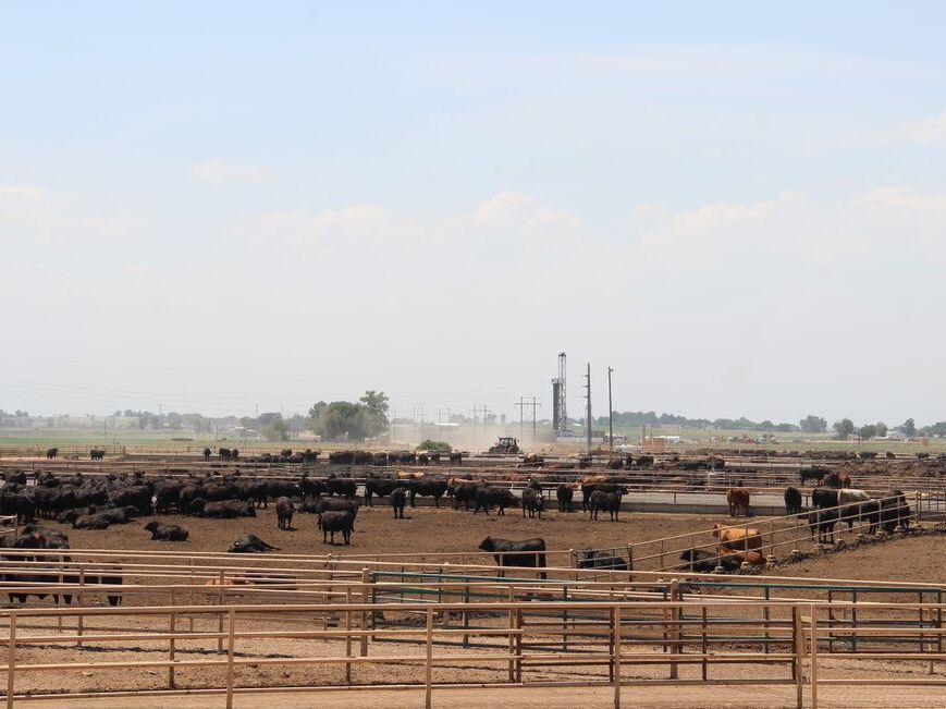 The Kuner Feedlot in Kersey, Colo., is part of JBS's Five Rivers cattle feeding operation.