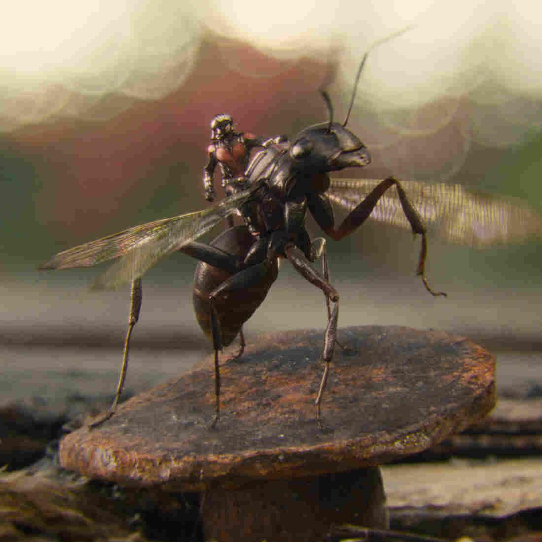 Little Hero, Big Screen: The Entomology Of 'Ant-Man'