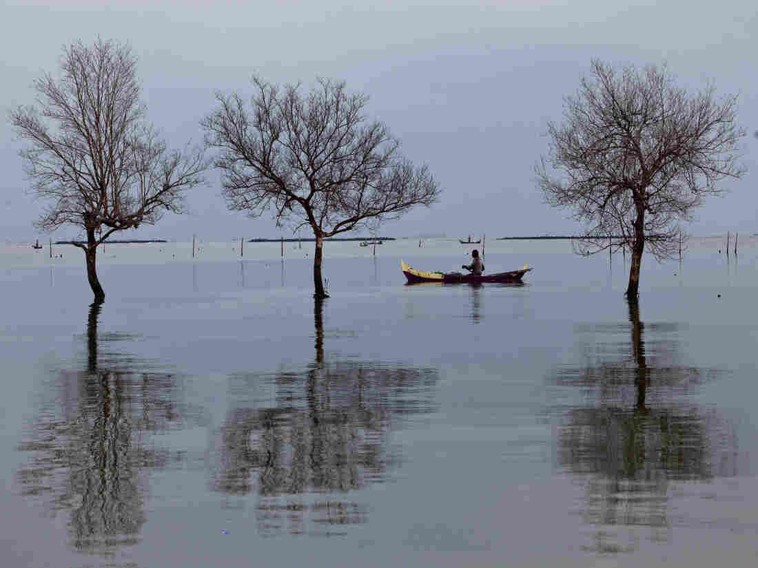 Floodwaters from rising sea levels have submerged and killed trees in Bedono village in Demak, Central Java, Indonesia. As oceans warm, they expand and erode the shore. Residents of Java's coastal villages have been hit hard by rising sea levels in recent years.