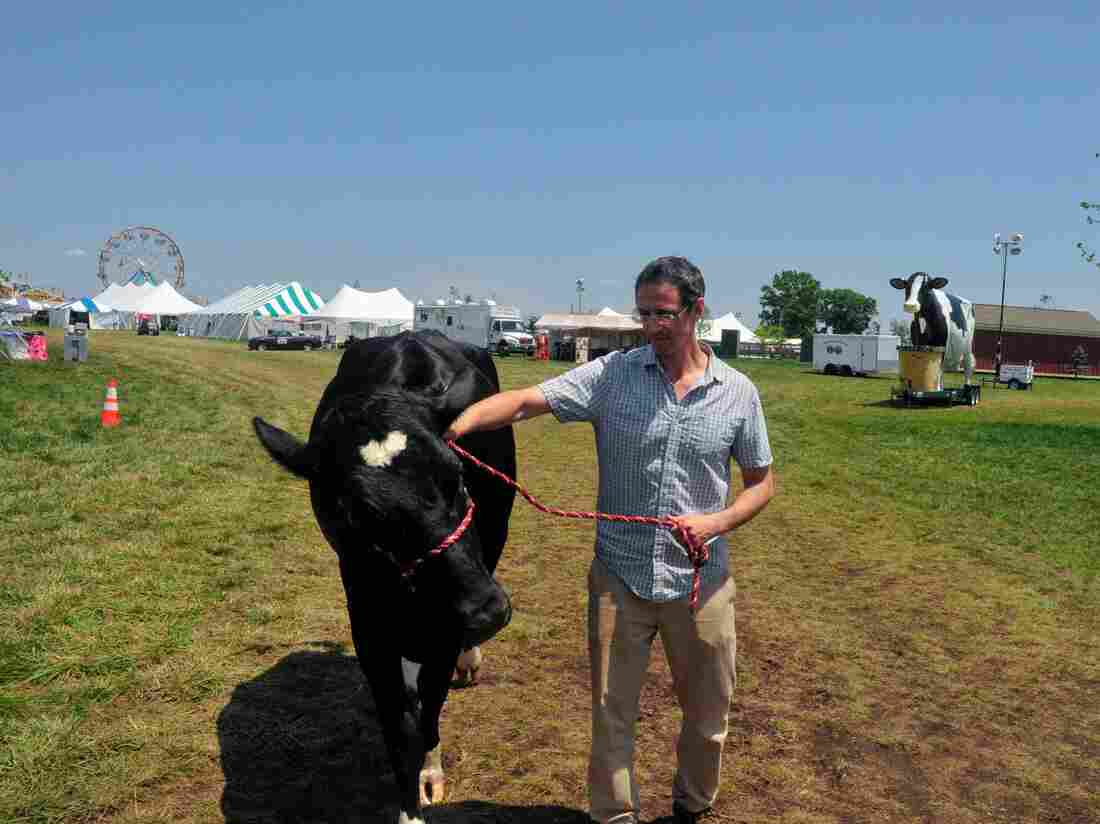 Goldstein has no idea how to hold a cow.
