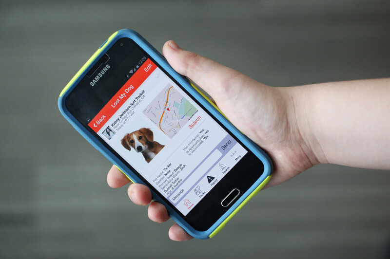 Every Missing Pet Poster Tells Story >> Dog Gone Missing Check Your Smartphone All Tech Considered Npr