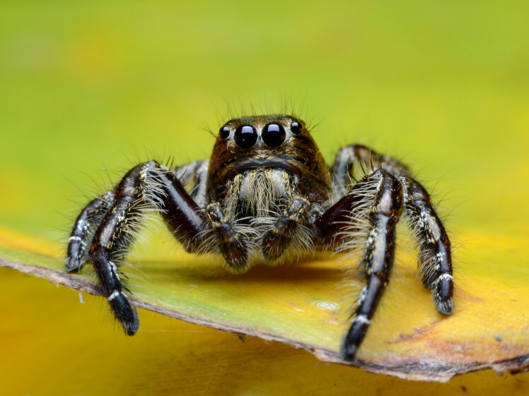 Putting Spiders On Treadmills In Virtual Reality Worlds NPR