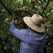 For Greece's Farmers, Growing Pressure To Be More Competitive