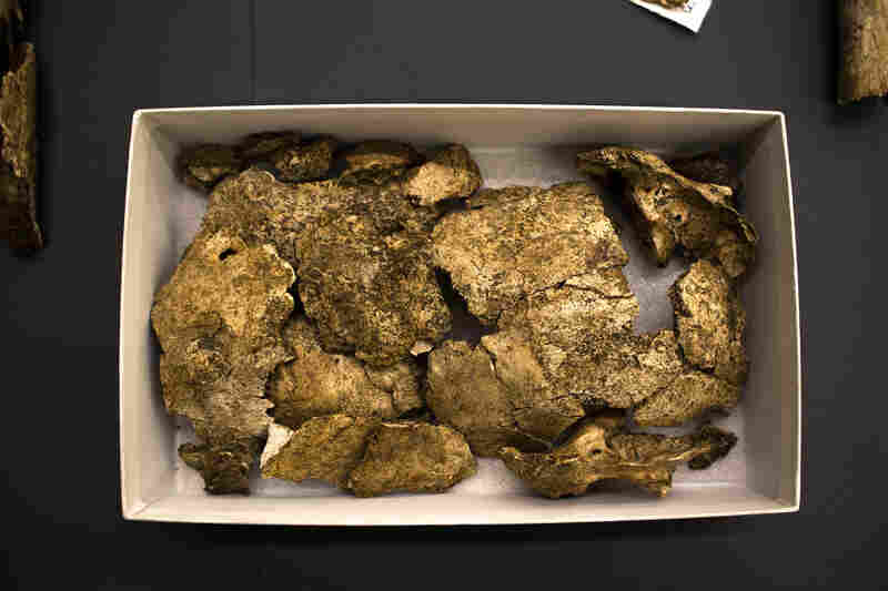 Only about 30 percent of each skeleton was recovered, including these pieces of one man's cranium.