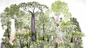 This is one of 12 rain forest landscapes by Abel Rodriguez, part of his ink-and-watercolor series Ciclo anual del bosque de la vega (Seasonal changes in the flooded rain forest).