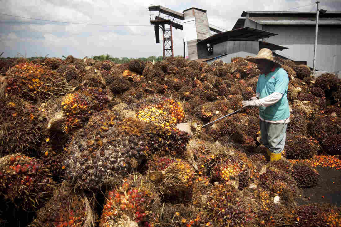 A worker collects oil palm fruits outside Kuala Lumpur, Malaysia in 2009. According to the State Department's 2015 human trafficking report, some foreign migrant workers on Malaysian palm oil plantations are subjected to forced labor.