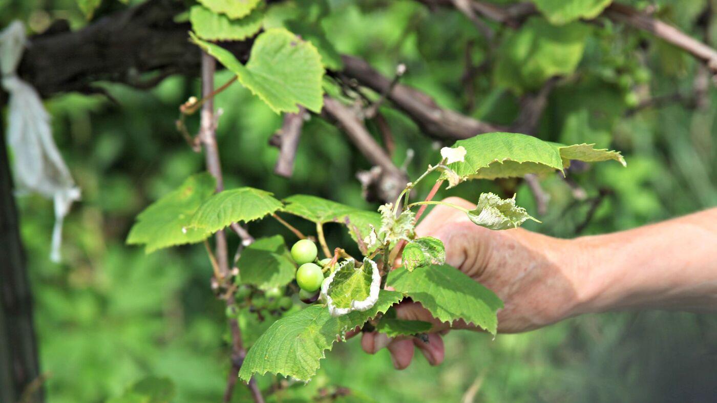 organic farming  pesticide drift threatens organic farms