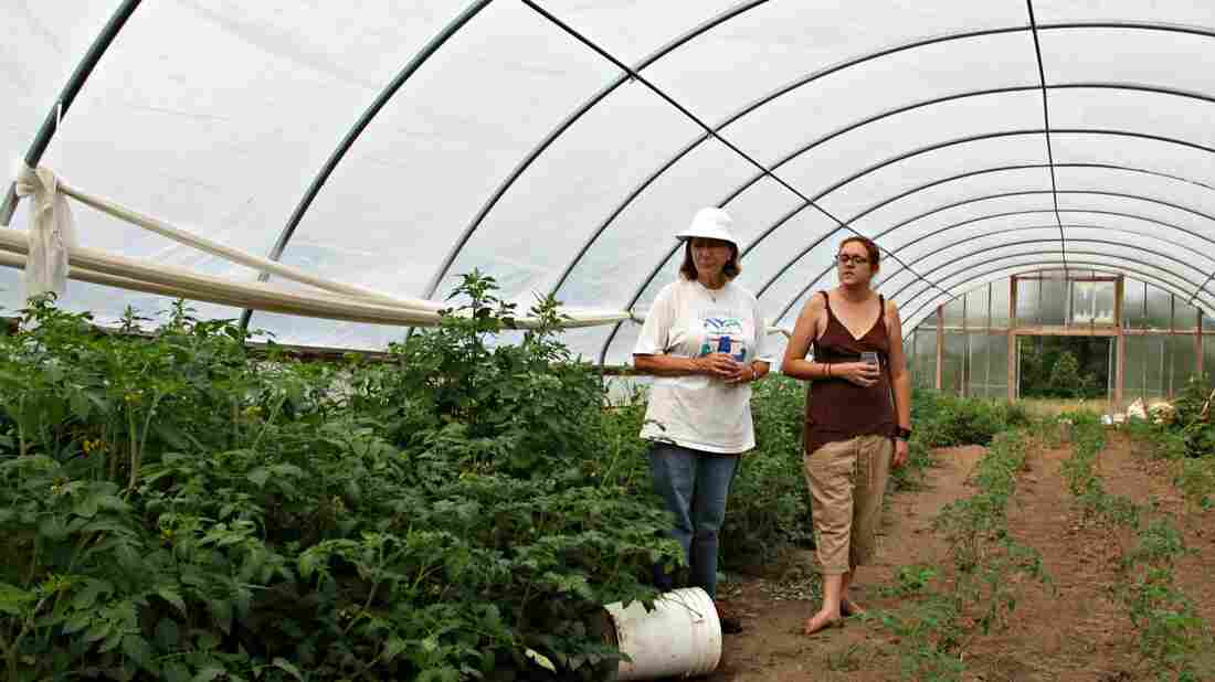 Organic farmers Margot McMillen and Julie Wheeler check on their tomato plants. They moved the plants into a greenhouse to protect them from pesticide drift.