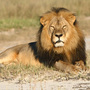 Delta Will Ban Big Game Trophies As Airline Freight