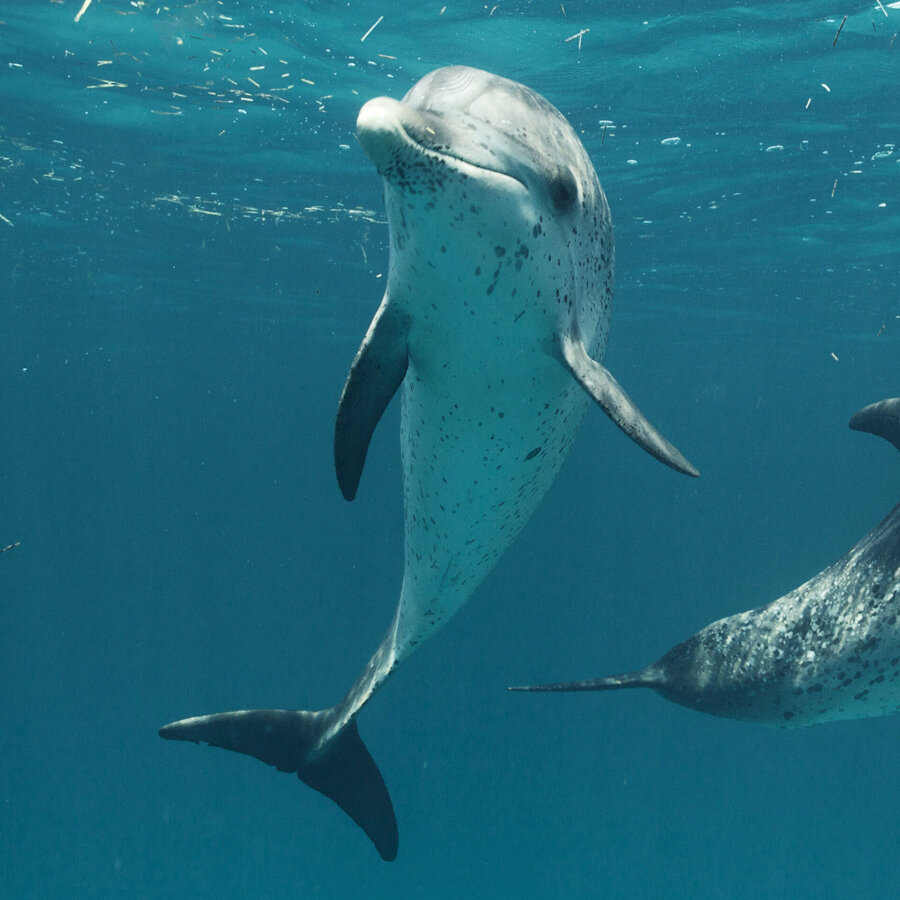 environment - Pics Of Dolphins