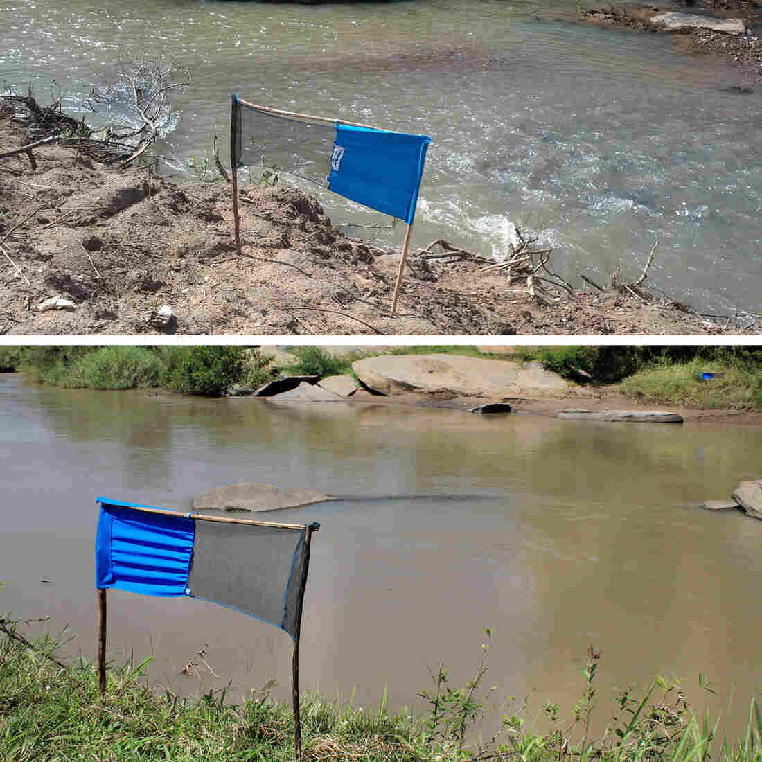 In The Fight Against Tsetse Flies, Blue Is The New Black