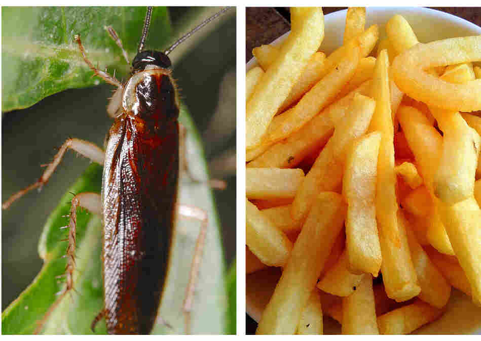 Sure, seeing a cockroach on your fries would turn you off eating them. But what about seeing a photo of a cockroach flash by before you see a photo of fries?