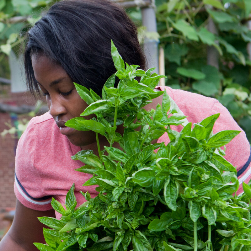 How Hydroponic School Gardens Can Cultivate Food Justice