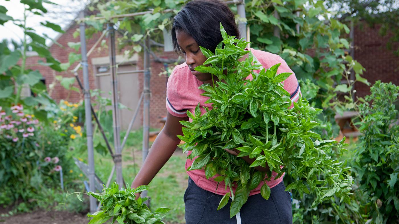 Healthy Eaters Strong Minds What School Gardens Teach Kids The Salt Npr