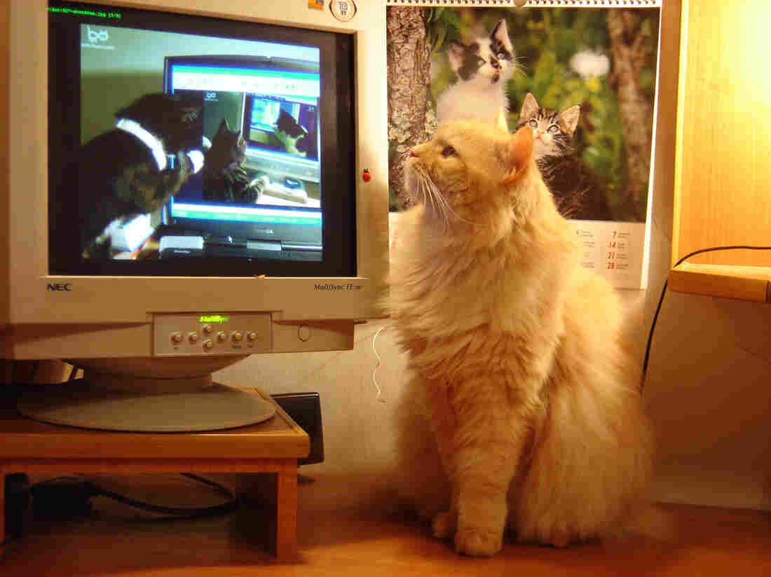 """The exhibition, """"How Cats Took Over the Internet,"""" will be running at Museum of the Moving Image through January 2016."""