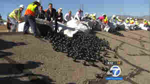 LA Rolls Out Water-Saving 'Shade Balls'