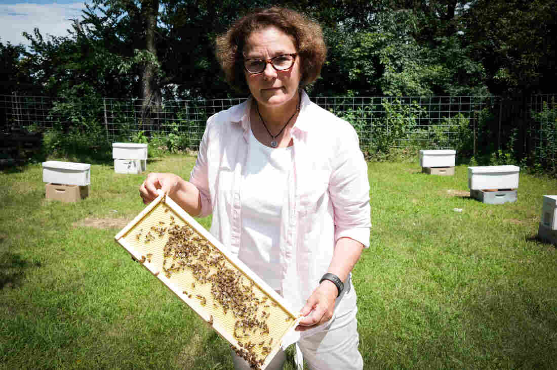 Maryann Frazier, a researcher at Penn State's Center for Pollinator Research, checks on one of her experimental honeybee hives.