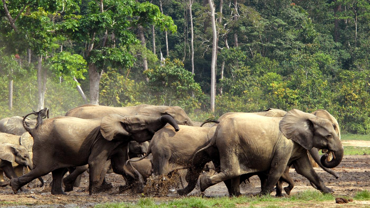 elephant-stampede_wide-0a296e5afa998e17c