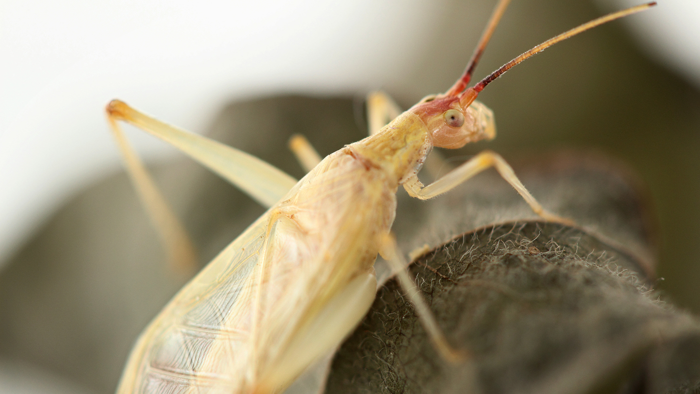 good vibrations key to insect communication npr