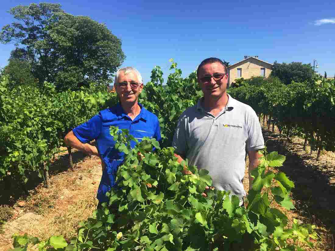 Robert Blanc (left) and his brother, Didier, stand in the middle of their vineyard, Domaine Saint Firmin, near the town of Uzes, in southern France. The area is known for its rosé wine in the summertime, and Robert Blanc says American importers have come looking for theirs.