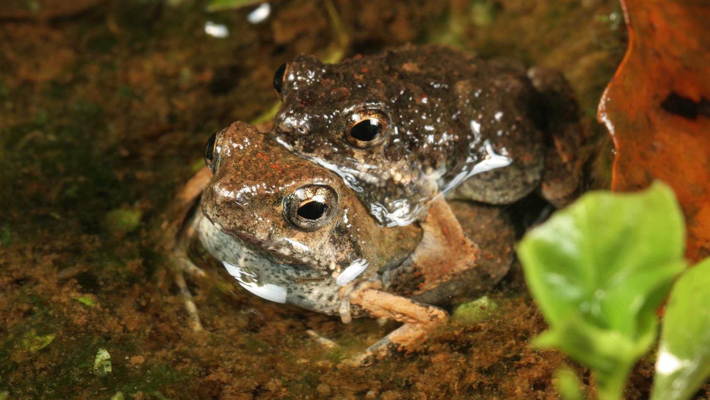frogs npr