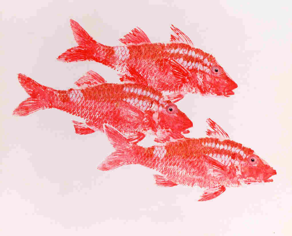 Kumu (sp. Parupeneus porphyreus). The Whitesaddle Goatfish has a special place in Hawaiian culture. In ancient Hawaii, the fish were used in offerings to the gods.