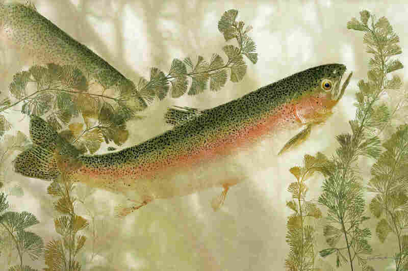 River Dreams Rainbow Trout.
