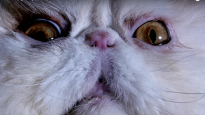 Beware: This Post Contains (Super! Epic!) Cat Video