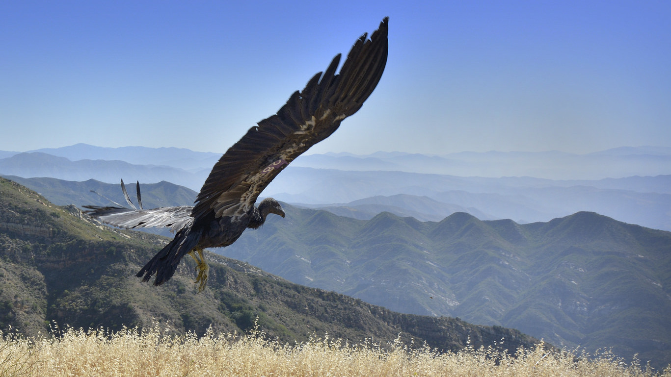 Small Shocks Help Enormous Birds Learn To Avoid Power Lines