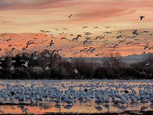 The view at daybreak in Bosque del Apache, N.M.