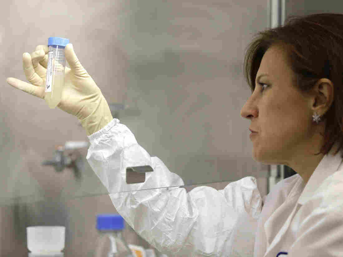 A quality control manager checks samples for unwanted bacteria as part of the process for making an influenza vaccine.