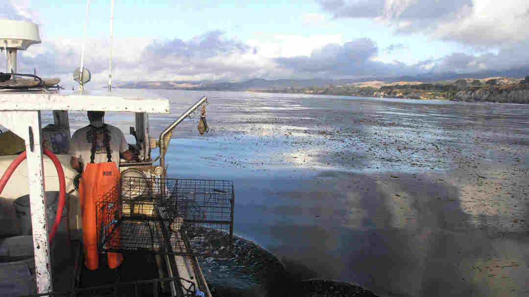 Sixteen Santa Barbara-based fishermen are participating in the Dock to Dish pilot program in California. Here, Charlie Graham fishes for lobster on his vessel, the March Gale, out of Santa Cruz Island.