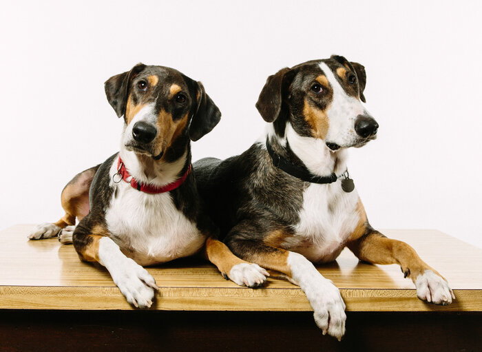 Ken, left, and Henry were created using DNA plucked from a skin cell of Melvin, the beloved pet of Paula and Phillip Dupont of Lafayette, La. (Edmund D. Fountain/NPR)