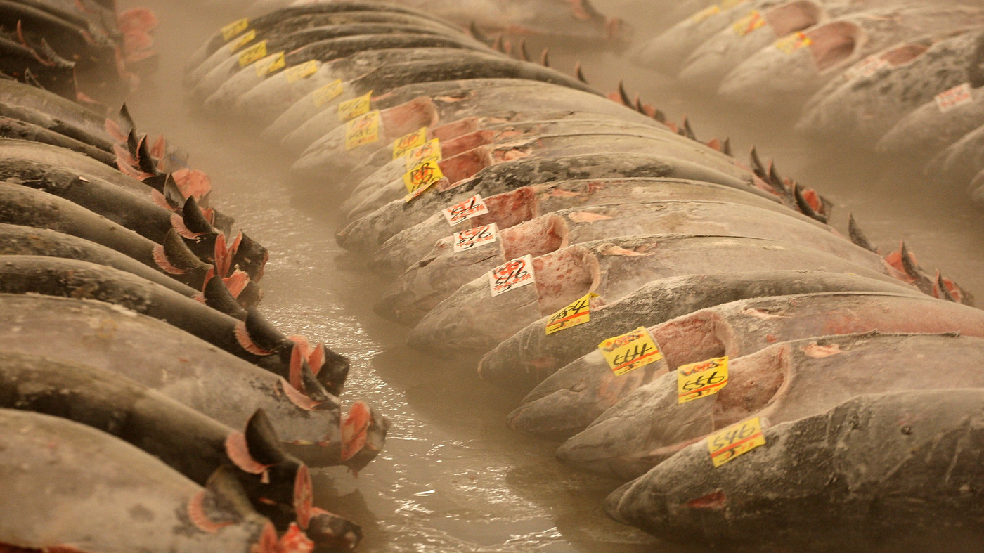 Why freezing didn 39 t keep sushi tuna safe from salmonella for How to freeze fish