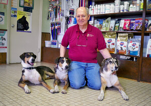 Phillip Dupont says losing his original dog Melvin, far right, was very hard, but Ken, far left, and Henry — two clones made from Melvin's skin cells — have helped a lot with the grief. The dogs' slightly different markings reflect differing environmental influences. (Courtesy of Paula Dupont)