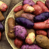 """A selection of heirloom potatoes, including Red Erik, Snowball, Cariboo, Purple Peruvian, Caribe and French Red. A sociologist says we value these """"edible memories"""" as a way to connect to the past and try and secure the future of food production."""