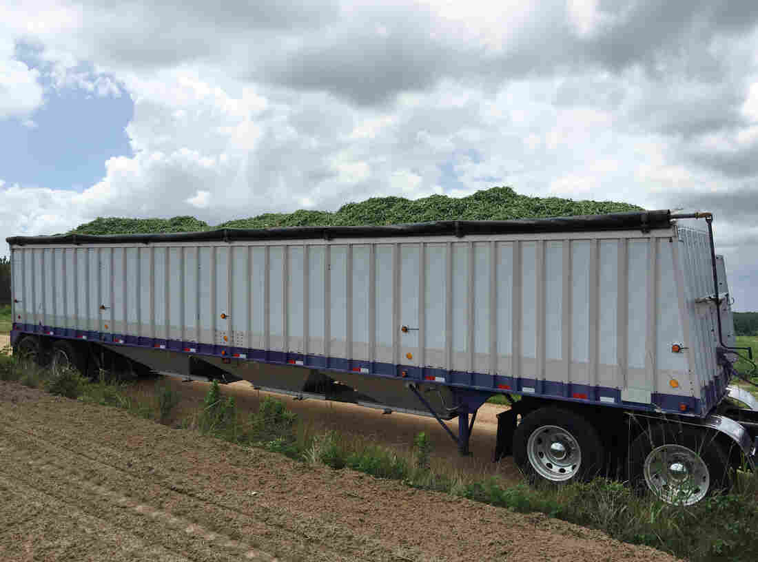 Blankenship started out moving livestock, some of the hardest work in trucking. These days he tends to haul fresh produce like this load of green beans.