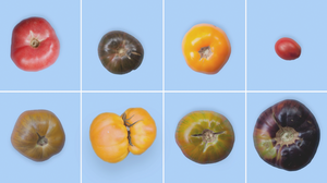 Open Your Eyes To The Infinite Possibility Of The Tomato