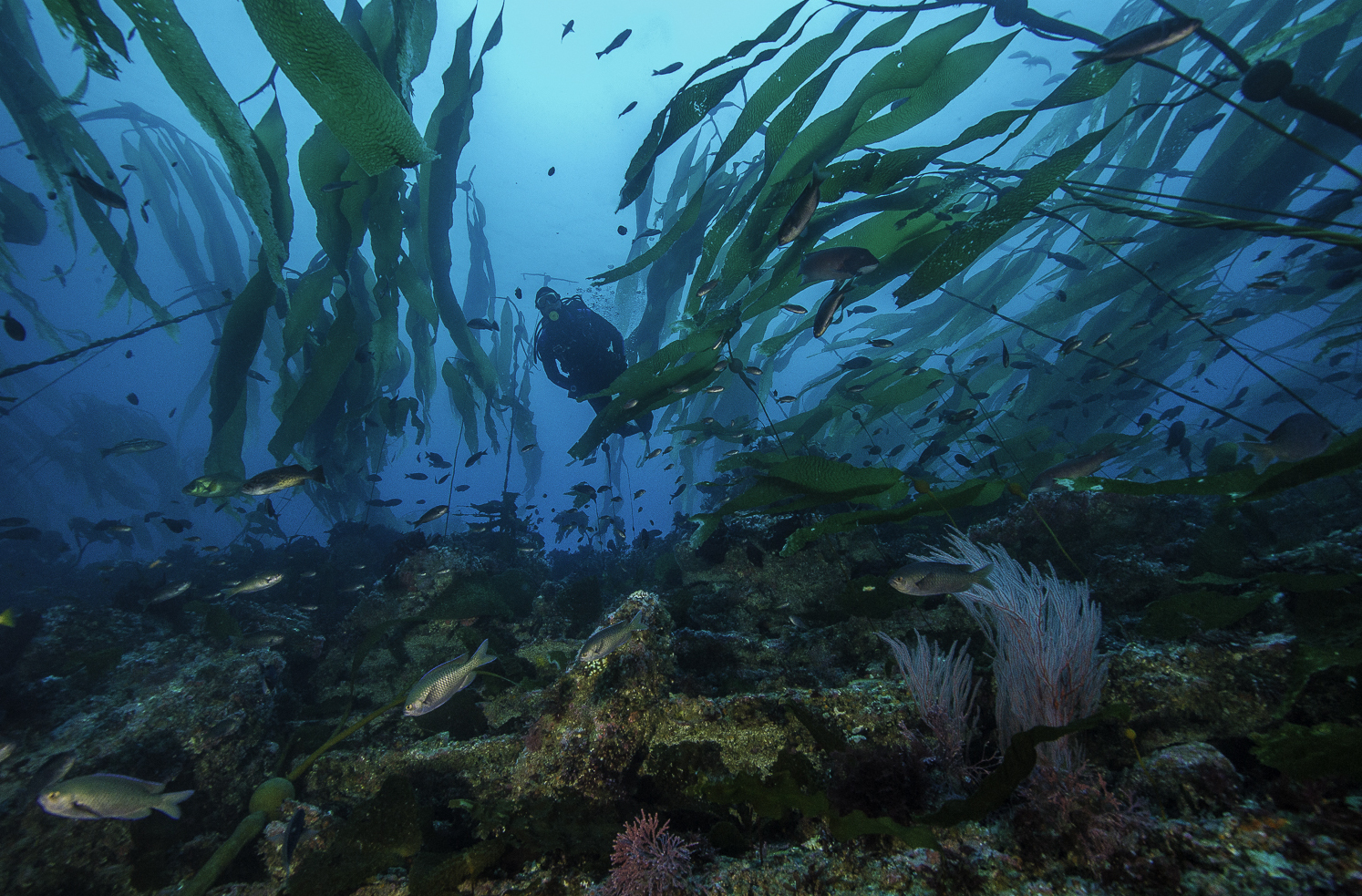 In California's Protected Waters, Counting Fish Without Getting Wet