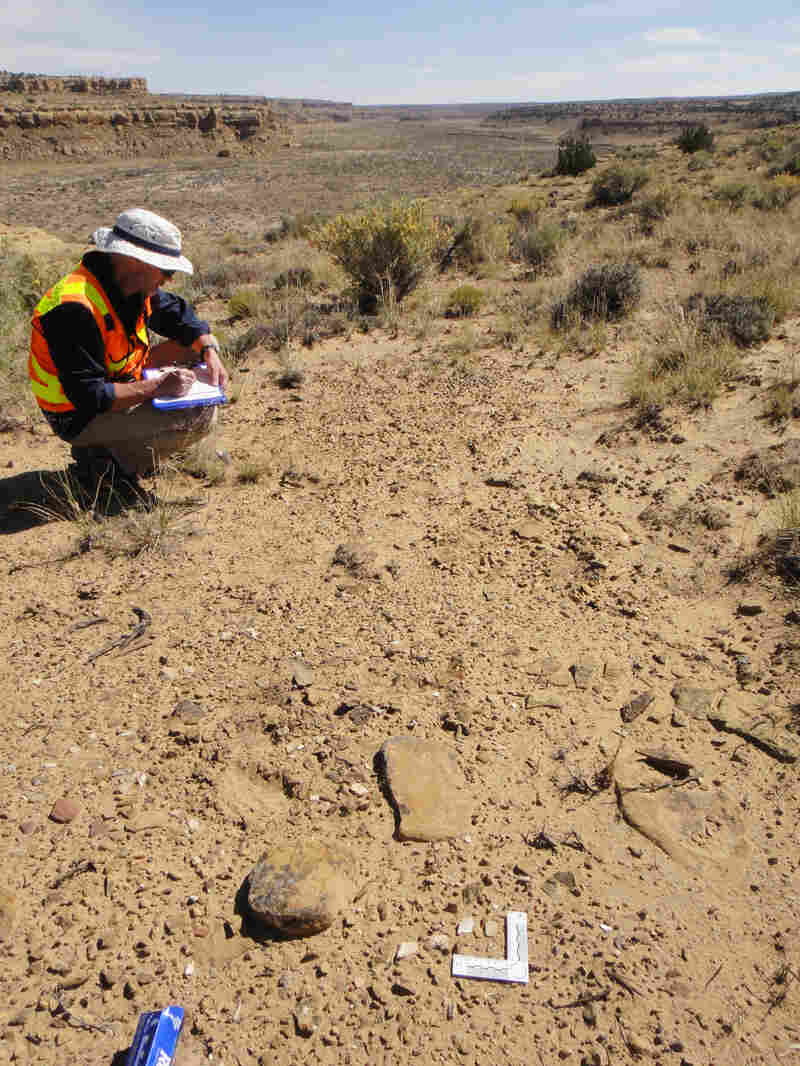 Archaeologist Chip Wills records samples of vessel shards at the Shabik'eschee Village in Chaco Canyon for residue analysis. In the foreground is a scale measuring a shard used in the analysis.