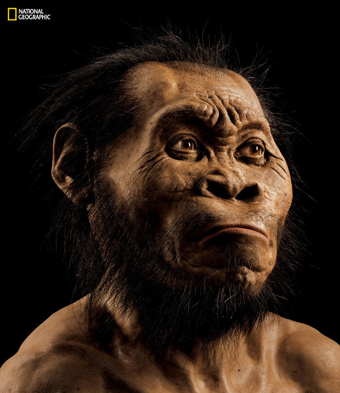 National Geographic paleoartist John Gurche used fossils from a South African cave to reconstruct the face of Homo naledi, the newest addition to the genus Homo.
