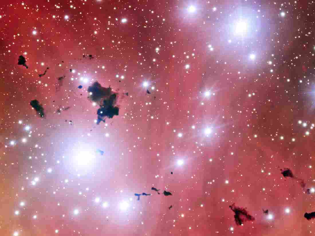 A stellar nursery consisting of a group of thick clouds of dust, known as the Thackeray globules, silhouetted against the pale pink glowing gas of the nebula, as captured by the European Southern Observatory's Very Large Telescope.