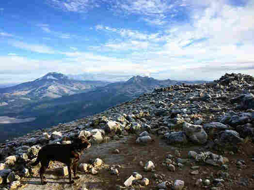 Dusty Bottoms, a chocolate lab, takes in the scenery atop Mount Bachelor in Oregon.