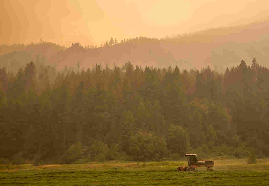 A farmer mows alfalfa amid the smoke from the Okanagon Complex Wildfires on Aug. 23 near Omak, Wash. The fires in the state have consumed more than 1 million acres.