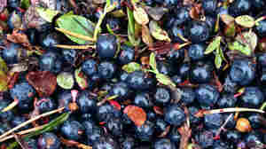 Asian Countries Have Nordic Berry Fever, And Finland Can't Keep Up