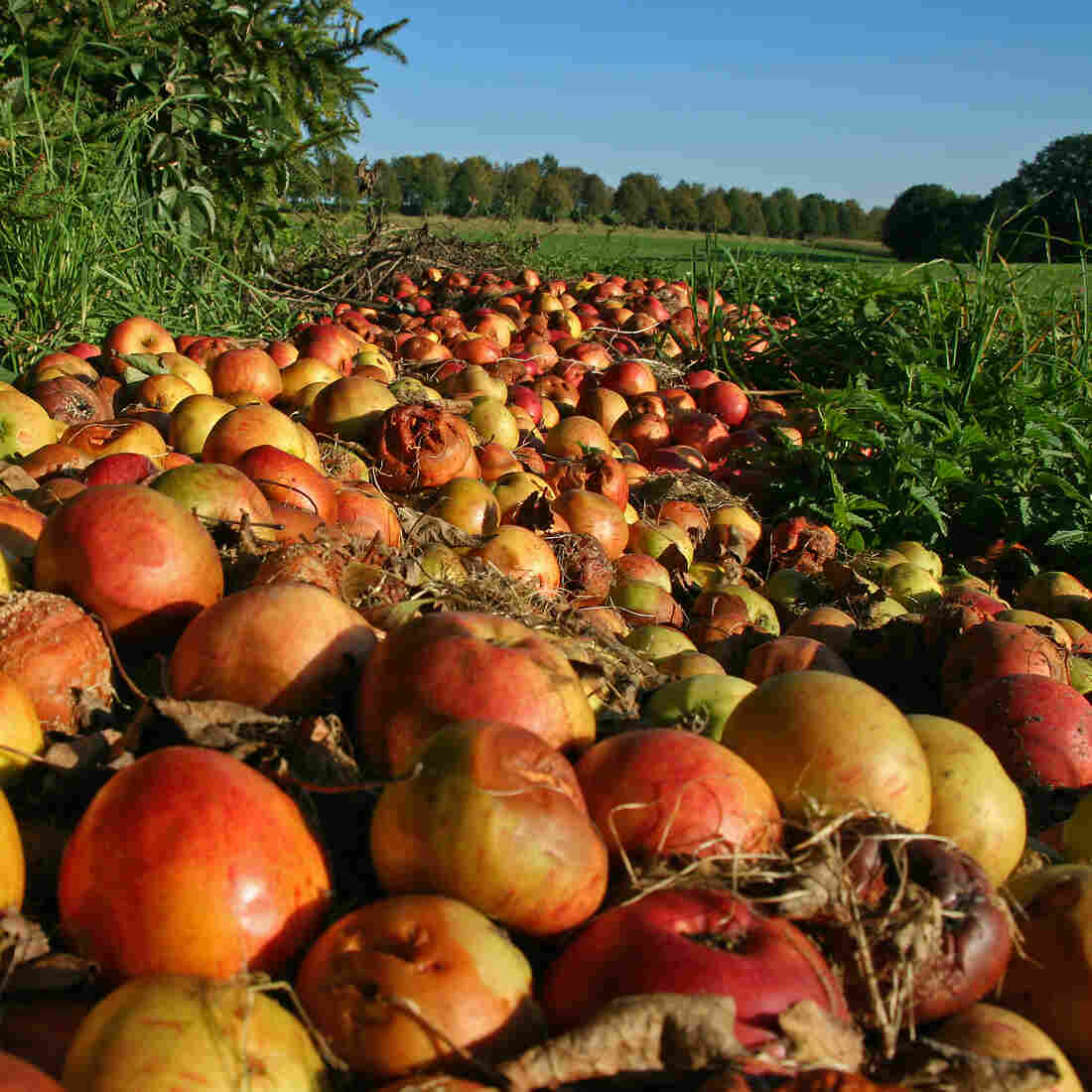 It's Time To Get Serious About Reducing Food Waste, Feds Say